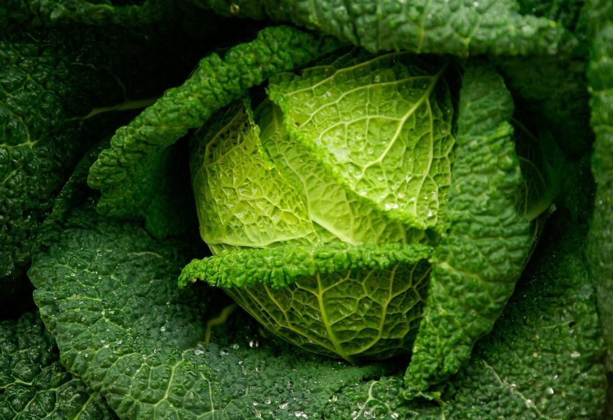 Che cavolo vuoi? Storie di uomini e Brassica