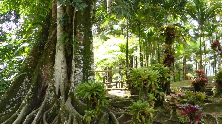 Jardin-Balata