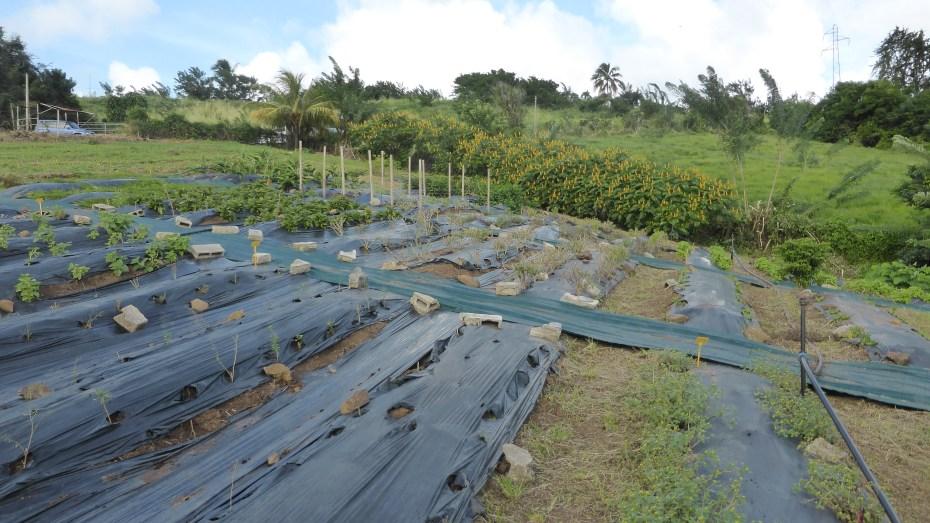 Chopotte-chambre-agriculture