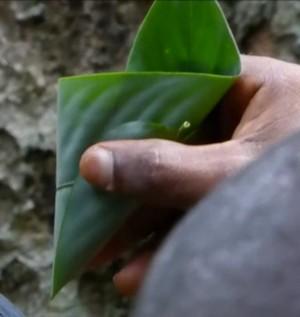 feuilles-goutte-a-goutte