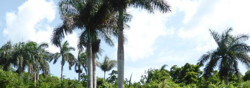 reconnaitre les arbres pdf free