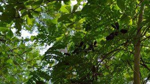 plante-graine-awele