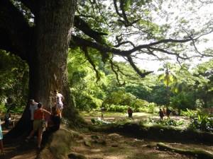 zamana-arbre-de-vie