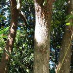 proprietes-plantes-intuition