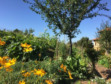 ferme permaculture