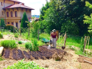 permaculture potager