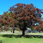 El árbol de nombre científico Erythrina crista-galli, conocido popularmente con el nombre vulgar de Ceibo, es el árbol de Argentina. Es una especie autóctona del país y por eso fue declarada como emblema nacional en 1942. También es el árbol nacional de Uruguay.