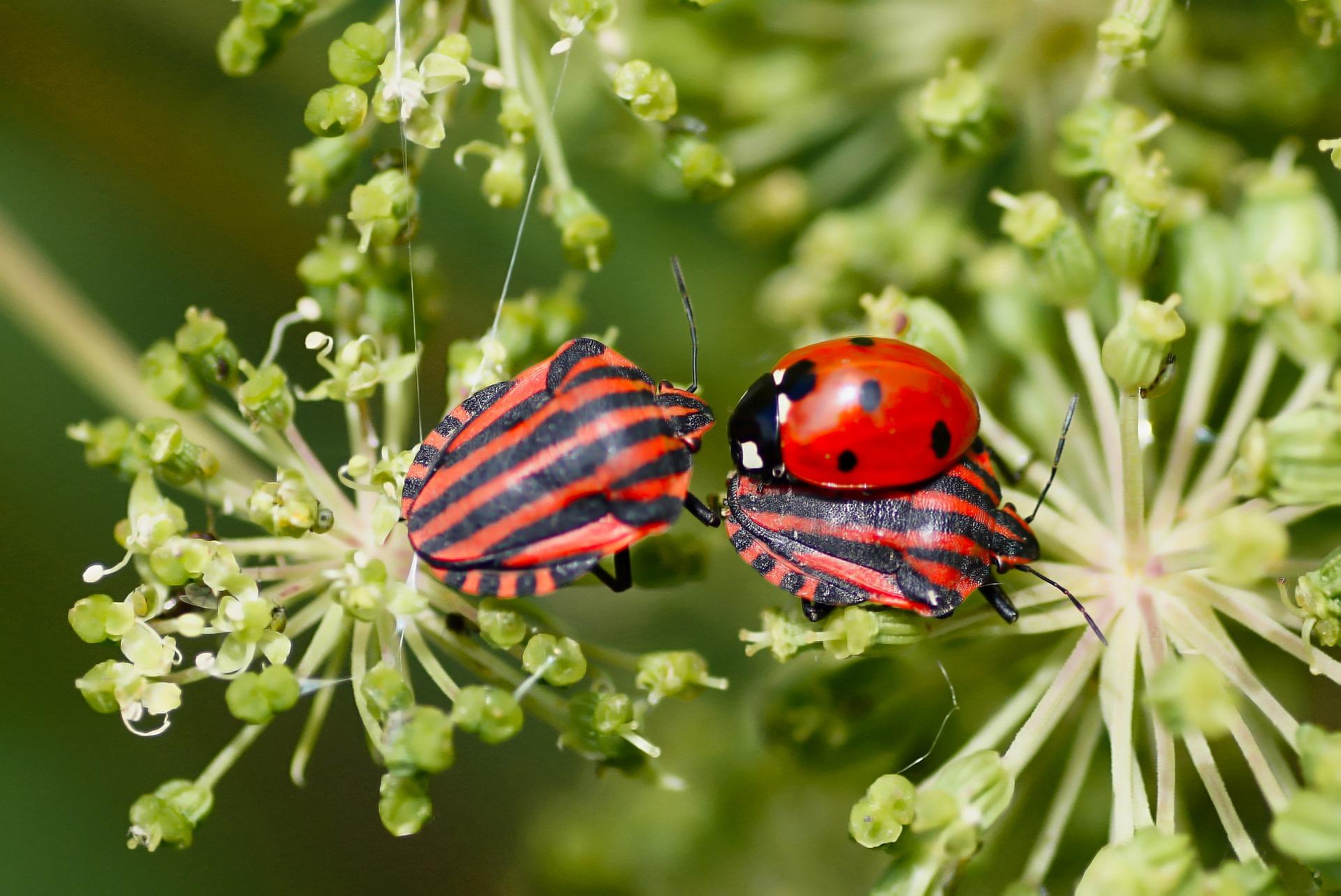 El impacto negativo sobre la biodiversidad se duplicaría si la temperatura crece 0,5 grados centígrados