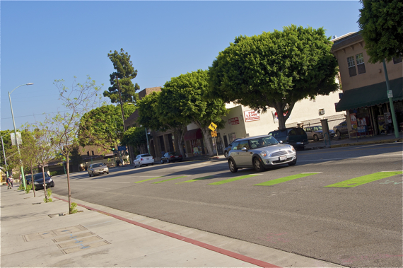 New trees will take years to offer a fraction of the shade and other benefits that the ficus trees slated for removal do. Sahra Sulaiman/Streetsblog L.A.