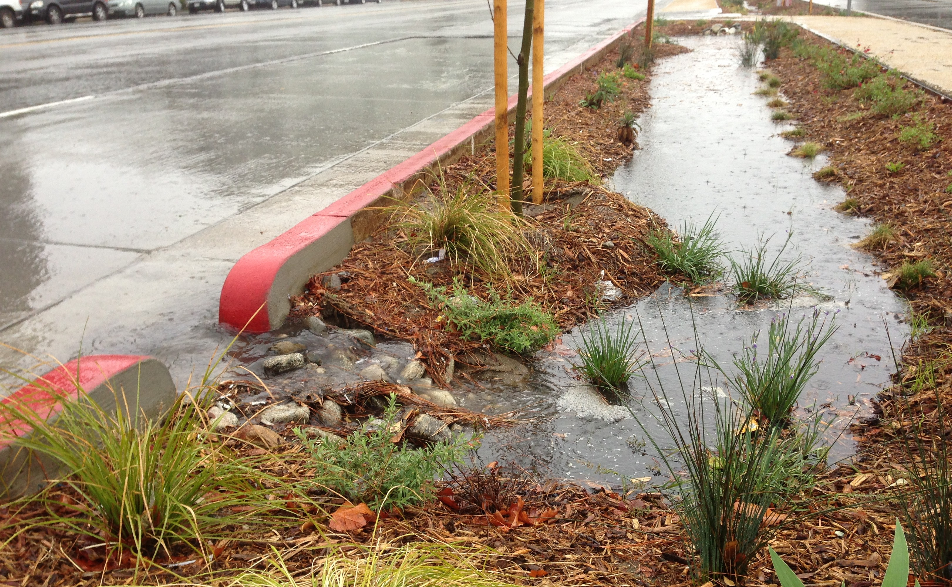 Upstream end of the Woodman Avenue project where the curb has been opened to allow water to flow into the vegetated swale. photo: Joe Linton/LA Streetsblog