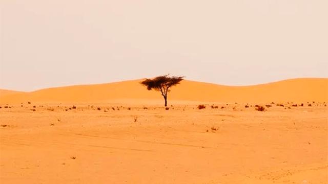 Un árbol en el Sahel