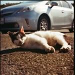 Hasselblad 500C/MにLOMO100を入れて撮った写真。