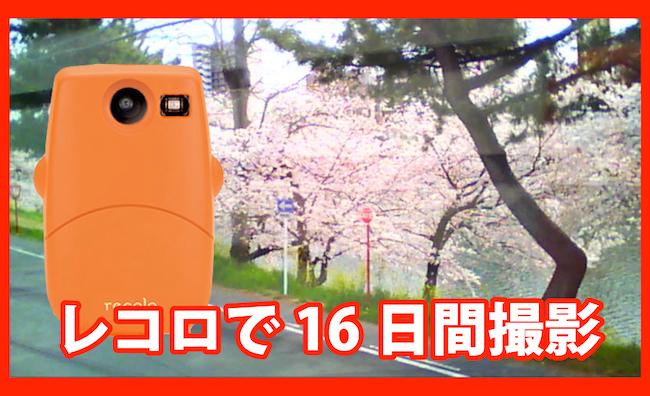岡崎の桜を16日間レコロでインターバル撮影してみました!