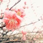 iPhoneのデフォルトカメラで「梅の花」を綺麗に撮るコツ!