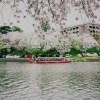 3年目の奇跡!SHUTTER HOLIC主催「桜撮影会」無事終了しました!