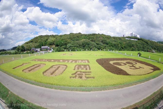 岡崎市に田んぼアート!巨大なオカザえもんが見れるのはあと少し・・・!