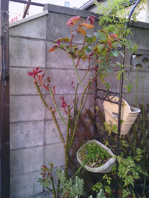 2013-03-22_garage-rose
