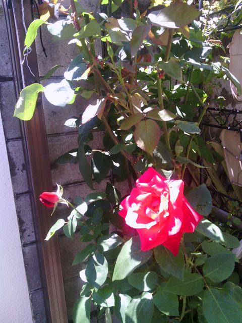 2013-05-12_garage-rose