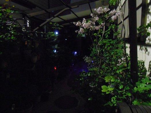 夜間 ガーデントーチ その2
