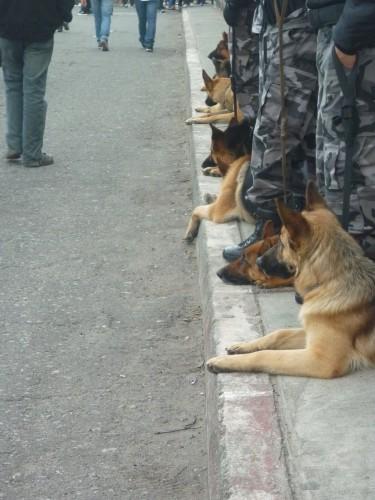 Fila de perros