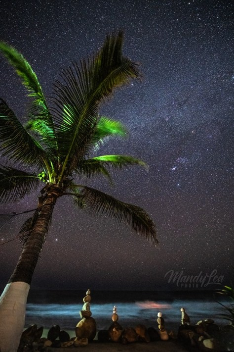 stars and palm tree