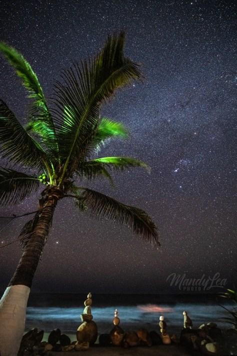 stars and palm tree