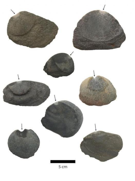 Орудия труда со сколами (показаны стрелками)