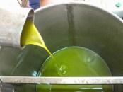 nasza oliwa