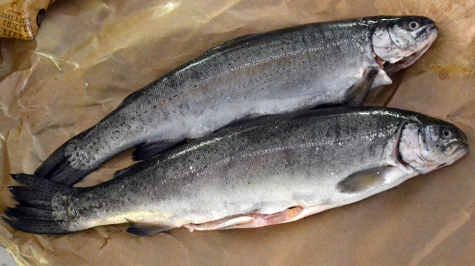Fresh Rainbow Trout | labellasorella.com
