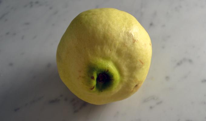 The lone quince | labellasorella.com