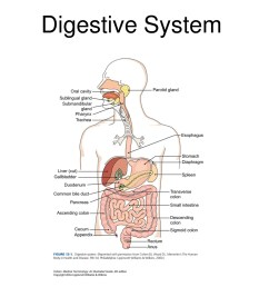 a labeled diagram of the digestive system [ 1500 x 1125 Pixel ]