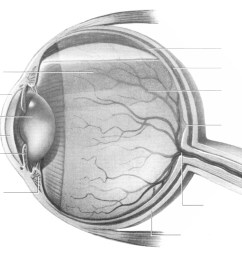 diagram of the human eye without labels [ 1030 x 915 Pixel ]