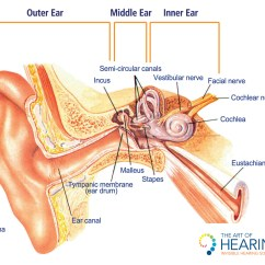 Outter Ear Diagram Labeled Human Landscape It Canal Best Wiring Library