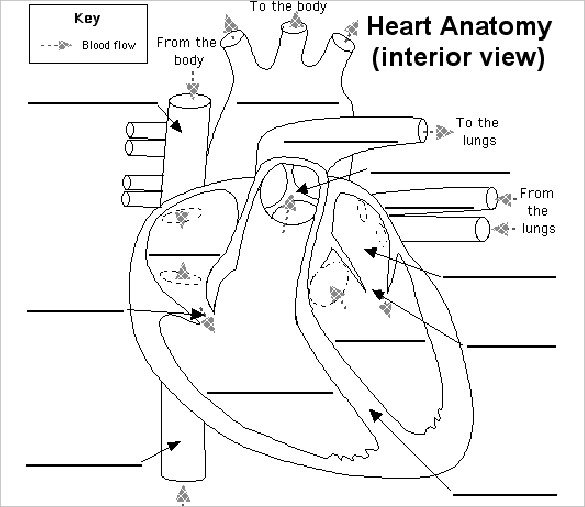 label heart diagram worksheet answers cat5 wiring australia to printable made by creative related for