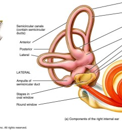 related for inner ear diagram labeled [ 1398 x 864 Pixel ]