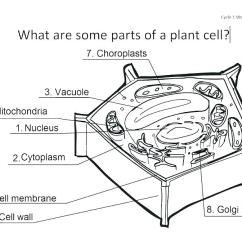 3d Animal Cell Coloring Diagram Brain Inferior Label Plant Worksheet Printable Labeled