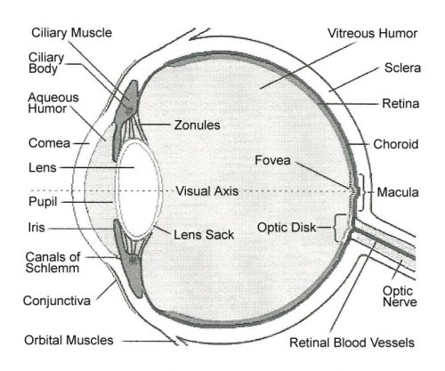 small resolution of labelled eye
