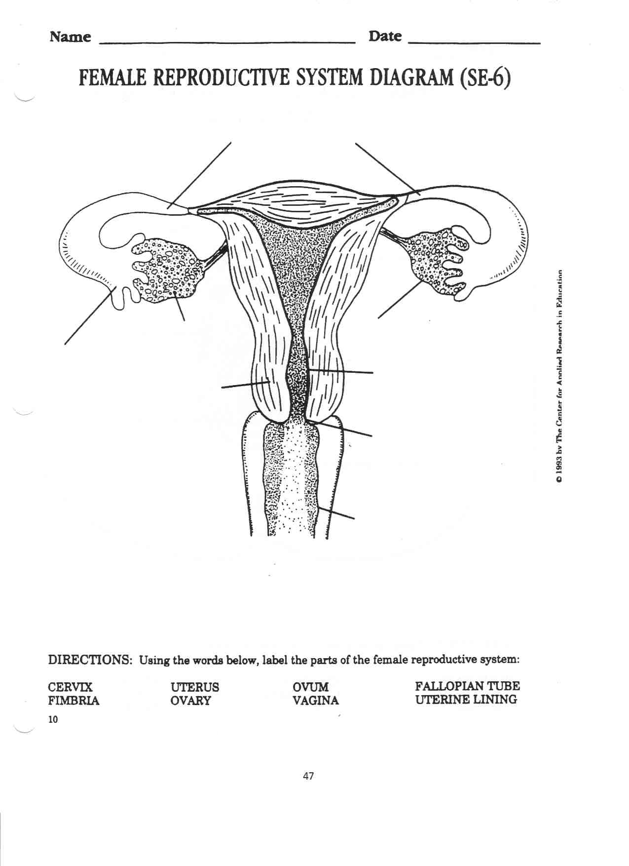 Male Reproductive System Labeling Quiz