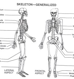 skeleton parts labeled labelled diagram of front and back of skeleton human skeleton diagram labeled skeleton labeled diagram labeled [ 4425 x 3905 Pixel ]