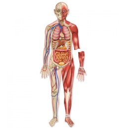the human body without labels human anatomy diagram without labels full picture of the human body with labels body diagram with [ 1000 x 1000 Pixel ]
