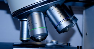 Crean de células madre minirriñones desarrollados,con riego y en solo 20 días