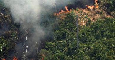 Los incendios en la Amazonía amenazan a especies como el leopardo y el manatí