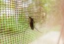 RD registra ocho muertes por dengue y 4,907 infectados