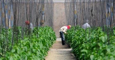 Crimson SSAN busca erradicar el hambre y alcanzar la seguridad alimentaria