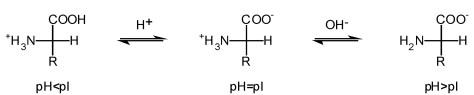 Znalezione obrazy dla zapytania aminokwasy rozne ph