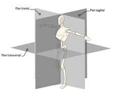 plans transversal-lateral-sagital