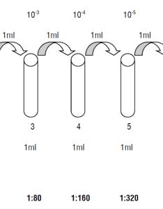 Widal test also principle procedure result interpretation and rh laboratoryinfo