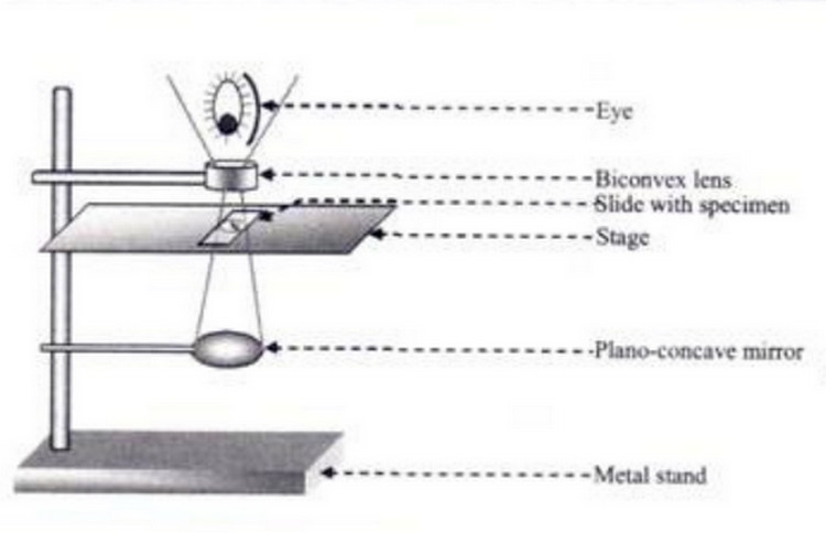 a diagram of microscope parts rigid heddle loom simple functions and labelling