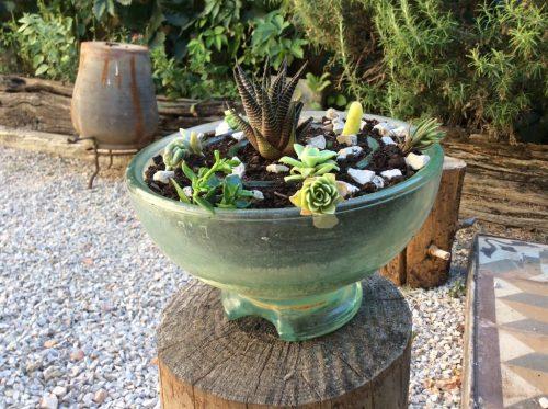 maceta aislante con cactus y suculentas