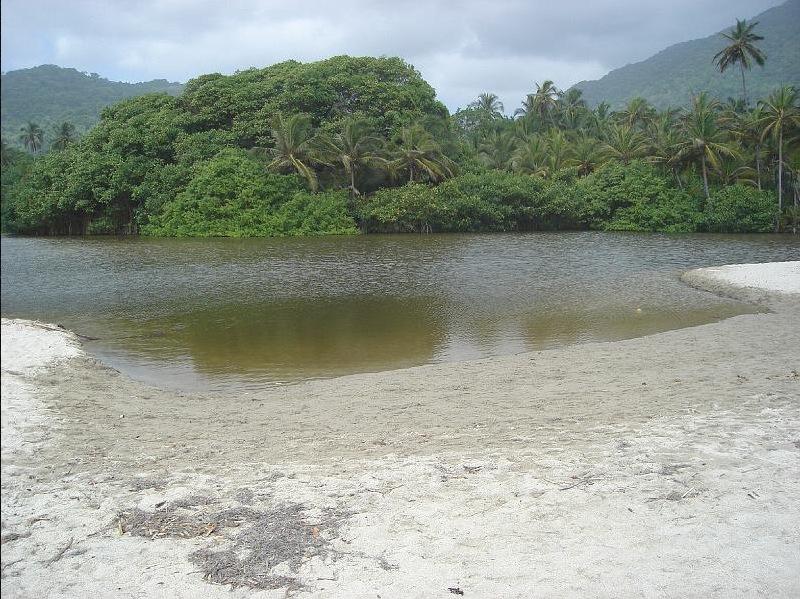 Equilibrio del manglar